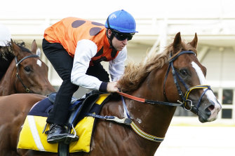 Tommy Berry rides Standout to a barrier trial win earlier this month.