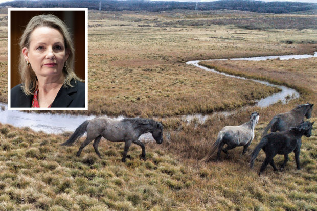 Sussan Ley threatens to override NSW on Kosciuszko feral horses