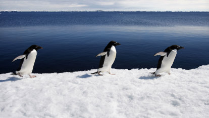'Very un-Antarctic': When the icy continent was not very cold at all