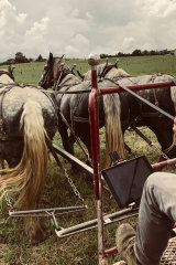 Cato behind the plough.