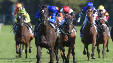 There are eight races on the card at Rosehill today.