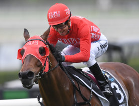 Red zone: Redzel will look to control the Victory Stakes from start to finish at Eagle Farm on Saturday.