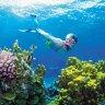 Coalition fighting to stop Great Barrier Reef being declared 'in danger'