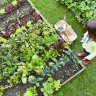 Researchers warn of unsafe lead levels in garden soil in many homes