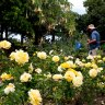 Brisbane allergy sufferers warned of record-breaking pollen season