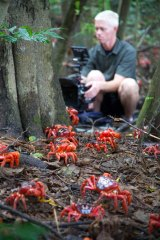 Another cameraman, Mateo Willis, films the stars of  Planet Earth II: red crabs migrating on Australia's Christmas Island.