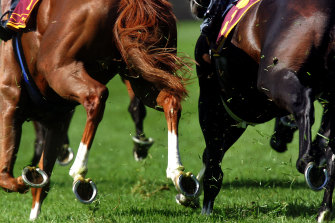 Ideally, a mare falls pregnant on 1 September at the very start of breeding season.