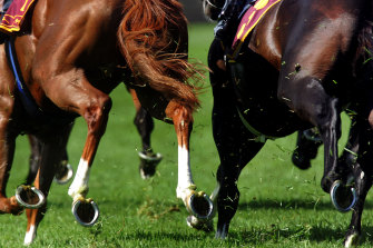 Tuesday's eight-card meeting at Wagga features strong chances in almost every race.