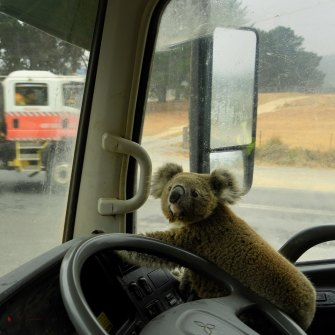 A koala named Tinny Arse sits in a water tanker after getting rescued near Nerriga, NSW on January 5, 2020.