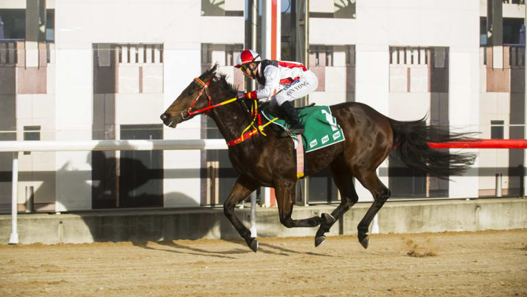 Qin Yong rides Athonis to victory in the $50,000 Federal at Thoroughbred Park on Friday.