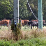 Queensland government blames horse owners for abattoir cruelty scandal
