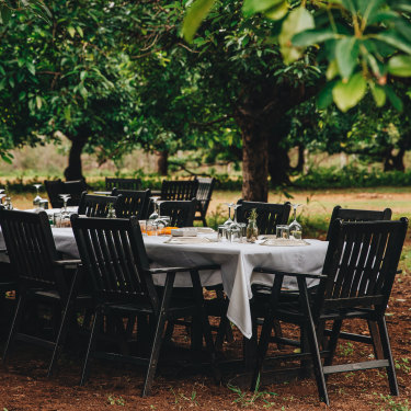 Awassi sheep farm and cheesery near Grantham,where cheese lovers can enjoy a platter and a bottle of wine under the avacado trees.