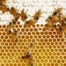 NZ's plan to stop Australian beekeepers from 'stealing' manuka honey