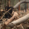 Logging in the fire-damaged South Brooman State Forest.