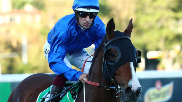 Godolphin's Phaistos is among the hopes for the Scone Cup on Friday.