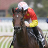 Written in the stars: Slipper favourite has barrier and timing on his side
