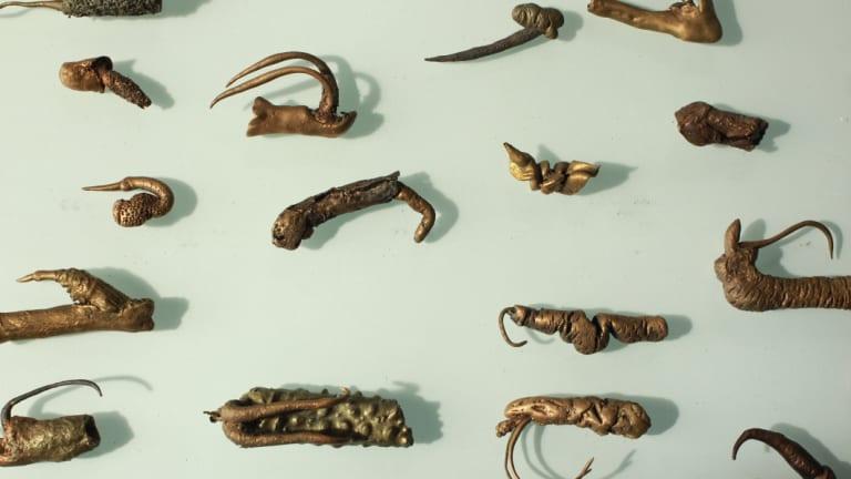 Maria Fernanda Cardoso's work depicting the genitalia of the damsel fly.