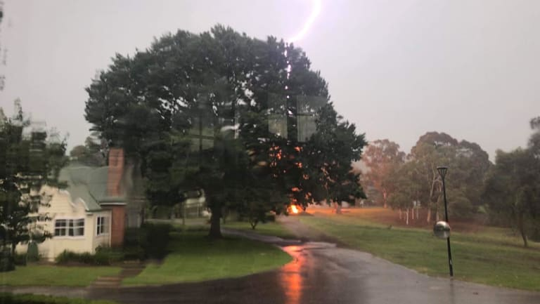 A lightning bolt hits a tree in Yarralumla on Friday afternoon.