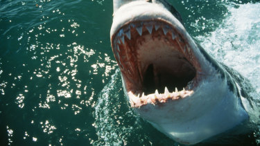 Shark bites are relatively rare in the US, with 32 incidents in 2018.