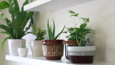 Indoor plants are pretty, but they can also improve air quality.