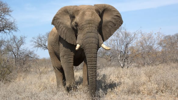 Bipartisan push to ban trade in elephant ivory and rhino horns