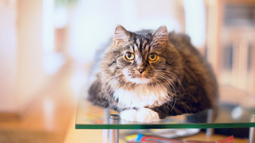 Seek to reduce the pressure on your cat's joints.