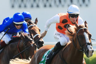 Flashy colt Standout powers away from Alizee in the Expressway Stakes in February.
