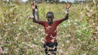 A farmer's son raises his arms as he is surrounded by desert locusts in Katitika village, Kenya.