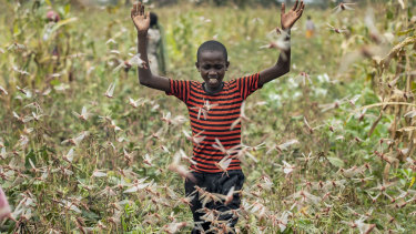 A farmer's son raises his arms as he is surrounded by desert locusts while trying to chase them away from his crops, in Katitika village, Kitui county, Kenya.