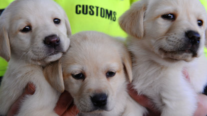 Scammers use puppies to prey on Black Friday bargain hunters
