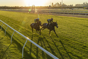 Neufbosc, pictured right at Flemington in 2019, has thrived in a hotter climate, under trainer Neville Parnham.
