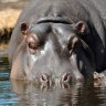 Big animals face extinction as habitats evolve