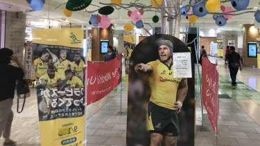 There he is: It's Wallabies fever in Odawara.