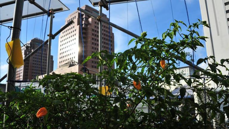 Comcrop's rooftop gardens in Singapore.