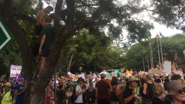 Protesters climb trees in Brisbane.
