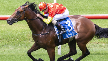 Rulership will be out to continue Henry Field's good run in Saturday's Blue Diamond.