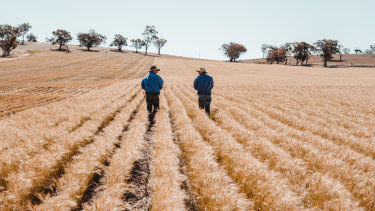 Companies that rely on the agriculture supply chain are investing $2 million in the Mars Cool Soil initiative to help 200 grain farmers reduce and measure their carbon emissions.