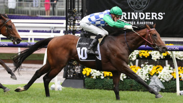 Shining bright: Jockey Ben Allen rides Fifty Stars to victory in race 3 on Melbourne Cup Day,