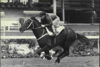 When Kingston Town made his mark, racecourse characters, given a moniker for many reasons, still abounded.