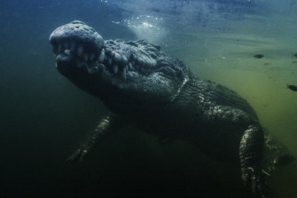 What a croc: The underwater footage is spectacular, but the croc almost stole the show - literally.