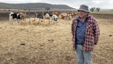 Pictured on his drought-stricken property in Pilton, near Toowoomba in Queensland, dairy farmer Brendan Hayden has been forced to buy feed for his cattle, the price of which is climbing.