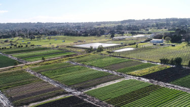 Crops in Baxter, with housing in the background.
