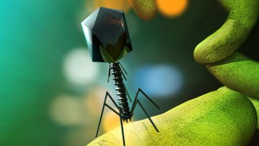 An artist's illustration of a phage virus attacking bacteria.