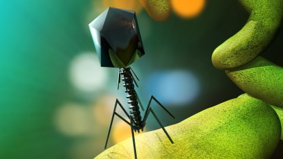 As antibiotic resistance threatens millions of lives, is phage therapy the best alternative?
