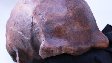 A cast of one of the skull caps found at Ngandong.