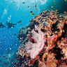 Fossil fuel backers 'deeply aligned' with reef rescue efforts