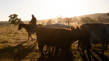 Beef fears take UK trade deal down to the wire when PM Morrison visits