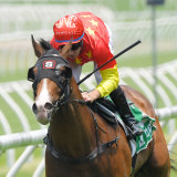 Aim gets to his ideal trip in the Sires