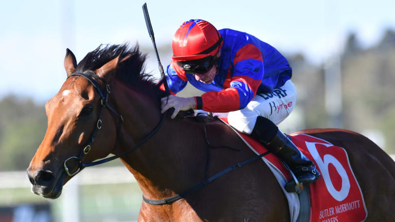 Novel approach: Jim Byrne drives Plot Twist to the line in the Queens Cup.