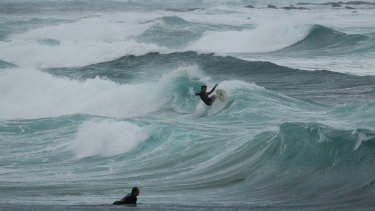 Newcastle surfers take advantage of rough surf at Nobbys Beach on Friday.